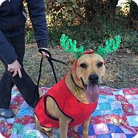 Adopt A Pet :: Ember Lou - Salisbury, NC