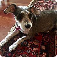 Adopt A Pet :: Miss Heidi - West Palm Beach, FL
