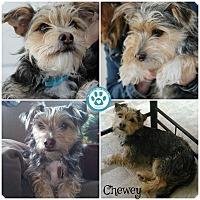 Adopt A Pet :: Chewey - Kimberton, PA