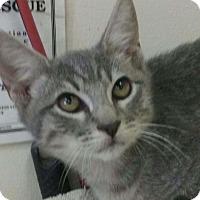 Adopt A Pet :: Bluray - Trevose, PA