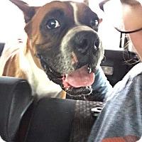 Adopt A Pet :: Cathal - Austin, TX