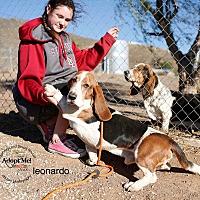 Adopt A Pet :: Leonardo - Acton, CA