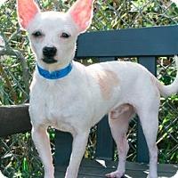 Adopt A Pet :: Jasper - Lakeland, FL
