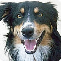 Adopt A Pet :: Bean - Glenrock, WY