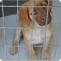 Adopt A Pet :: Beaufort - Alexandria, VA