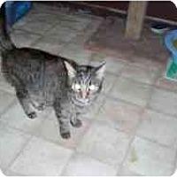 Adopt A Pet :: Miss Holly - Hamburg, NY