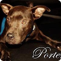Adopt A Pet :: Porter - Orlando, FL