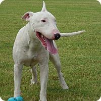 Adopt A Pet :: Olaf - Scottsdale, AZ