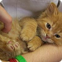 Adopt A Pet :: Peter - Toledo, OH