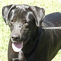 Adopt A Pet :: Luke - Allentown, PA