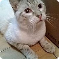 Adopt A Pet :: BACI - Ridgewood, NY