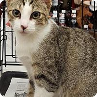 Adopt A Pet :: Hollyberry - Nashville, TN