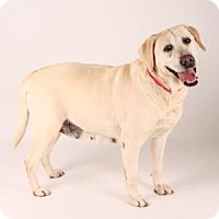Adopt A Pet :: Dee Dee - San Francisco, CA