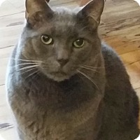 Adopt A Pet :: Dougal - Adoption Pending - Horsham, PA