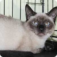 Adopt A Pet :: Frankie - Palo Alto, CA