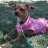 Adopt A Pet :: Sofia - Las Vegas, NV