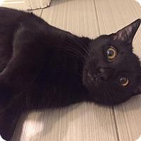Adopt A Pet :: Velvet - Gainesville, FL