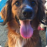 Adopt A Pet :: Max - Thousand Oaks, CA