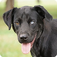 Adopt A Pet :: *Pierce - PENDING - Westport, CT