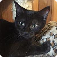 Adopt A Pet :: Gage - Davison, MI