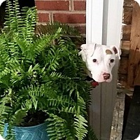 Adopt A Pet :: Lucille - Athens, GA