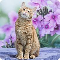 Adopt A Pet :: Haymitch - Houston, TX