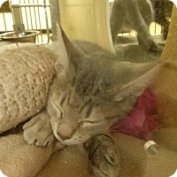 Adopt A Pet :: Rachel - Northfield, OH