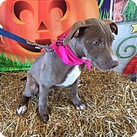 Adopt A Pet :: Cider - Charlotte, NC