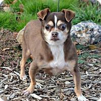 Adopt A Pet :: Chandelle - Yreka, CA