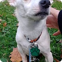 Jack Russell Terrier Mix Dog for adoption in Elyria, Ohio - Charity