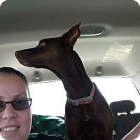 Adopt A Pet :: Kelly - El Paso, TX