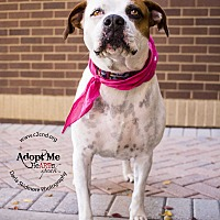 Adopt A Pet :: Mya (Bonded Pair) - Mooresville, NC