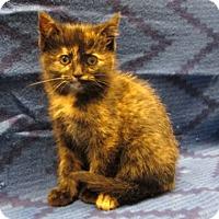 Adopt A Pet :: 16-c12-014 Gia - Fayetteville, TN