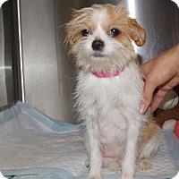 Adopt A Pet :: 'WILMA' - Agoura Hills, CA