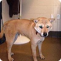 Adopt A Pet :: Harper - Beverly Hills, CA
