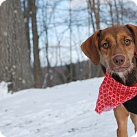 Adopt A Pet :: DJ - New Castle, PA