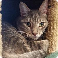 Adopt A Pet :: Carson - Sarasota, FL