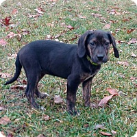 Adopt A Pet :: Echo - New Oxford, PA