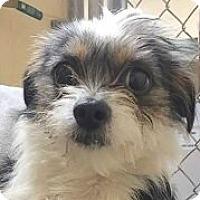 Adopt A Pet :: Sparky - Springdale, AR