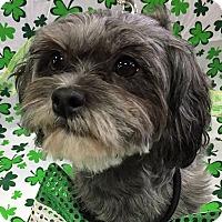 Adopt A Pet :: Lucy - Newington, VA