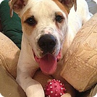 Adopt A Pet :: Stone - Dallas, GA