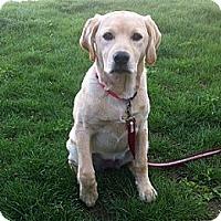 Adopt A Pet :: Lily - Hamilton, ON