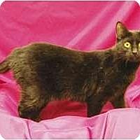 Adopt A Pet :: Lois - Sacramento, CA