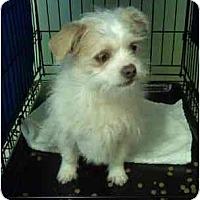 Adopt A Pet :: Freddie - Staunton, VA