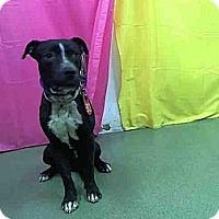Adopt A Pet :: Stefano URGENT - San Diego, CA