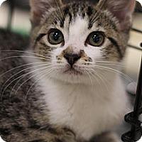 Adopt A Pet :: Whiskers - Sacramento, CA