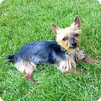 Adopt A Pet :: Benji - Portland, OR