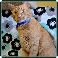 Adopt A Pet :: Leo de Kitty - Glendale, AZ