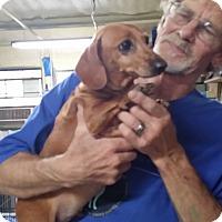 Adopt A Pet :: Festus - Lubbock, TX