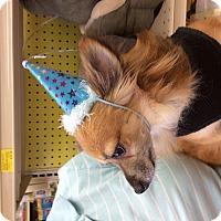 Adopt A Pet :: Lucky - S. Pasedena, FL